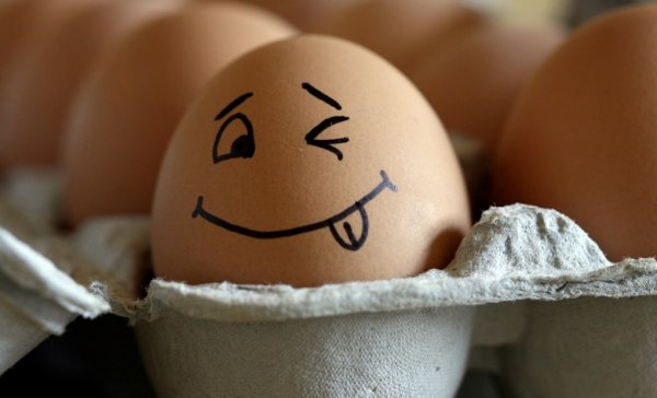 Курица снесла яйцо без скорлупы причина