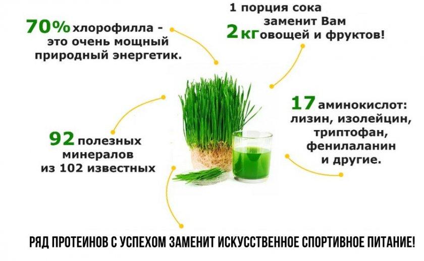 Состав сока ростков пшеницы