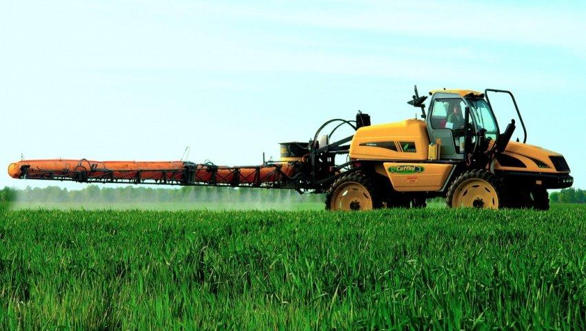 Обработка пшеницы от болезней и вредителей