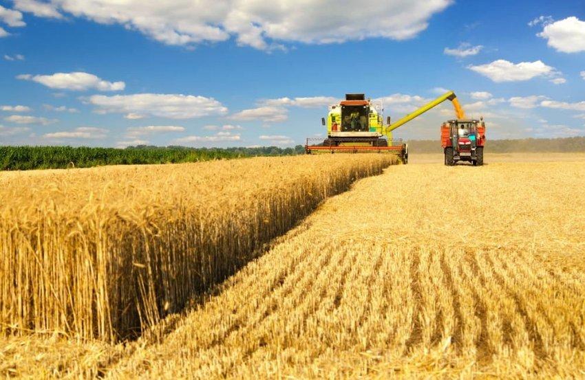 Уборка пшеницы с полей