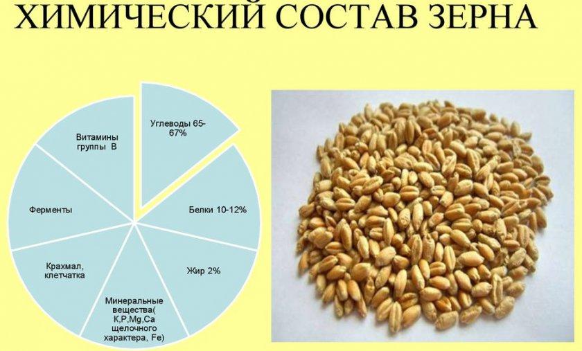 Химический состав зерна