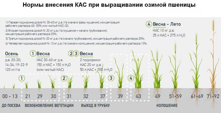 Схема подкормки озимой пшеницы