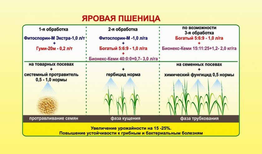 Подкормка яровой пшеницы
