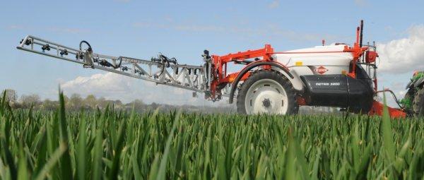Когда подкармливать озимую пшеницу