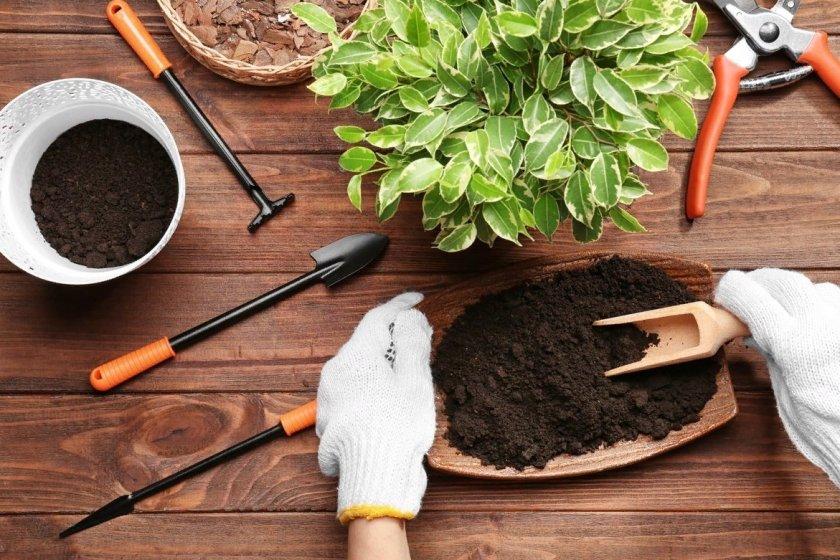 Как правильно и когда пересаживать комнатные растения
