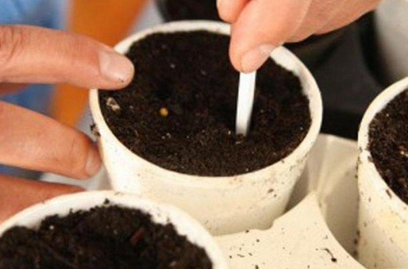 Почва для посева огурцов