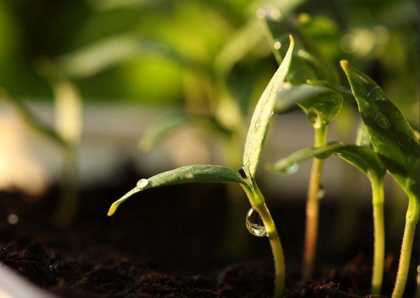 Почему семена не прорастают? Факторы которые на это влияют