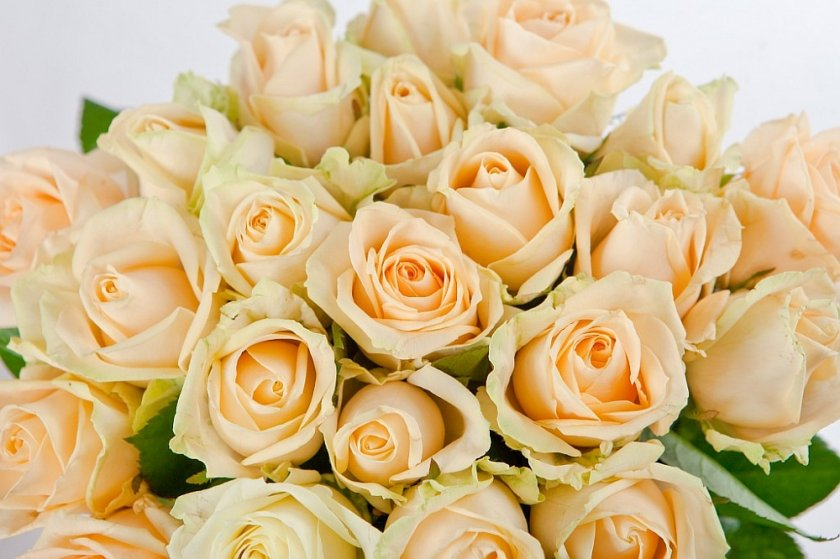 Роза сорта Пич Аваланж