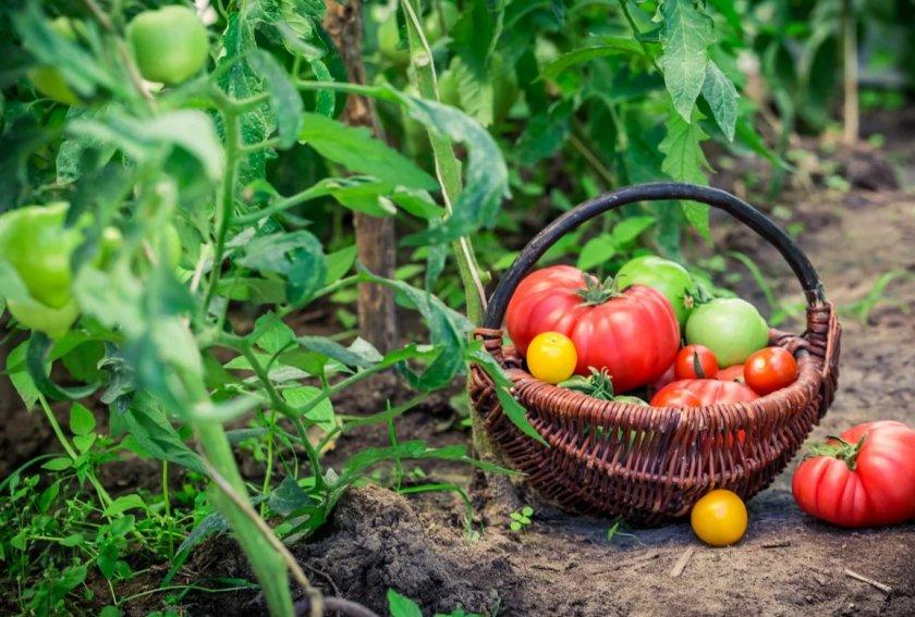 Секреты высокого урожая в 2020