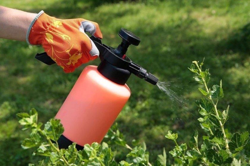 В Украине активно вносят средства защиты растений