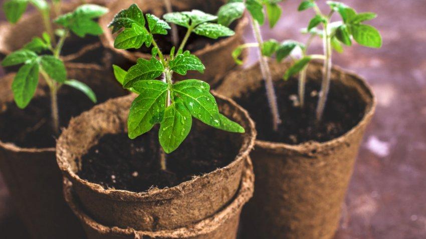 Как продать излишки урожая и рассады, не выходя из дома