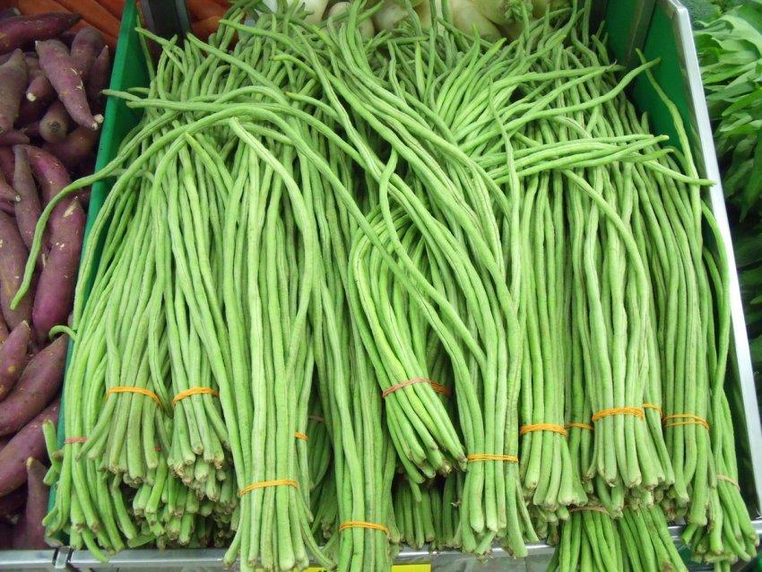 Китайская фасоль Вигна: секреты выращивания