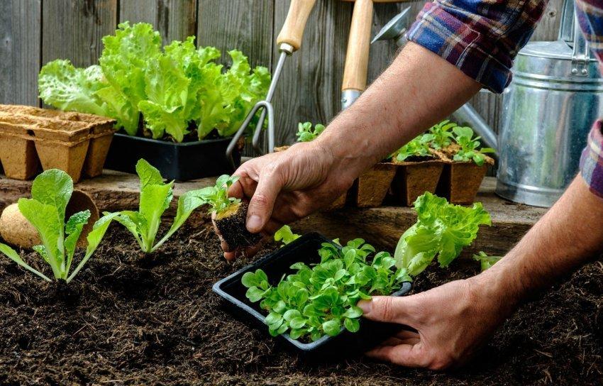 Каждому растению для нормального развития требуется определённый показатель рН