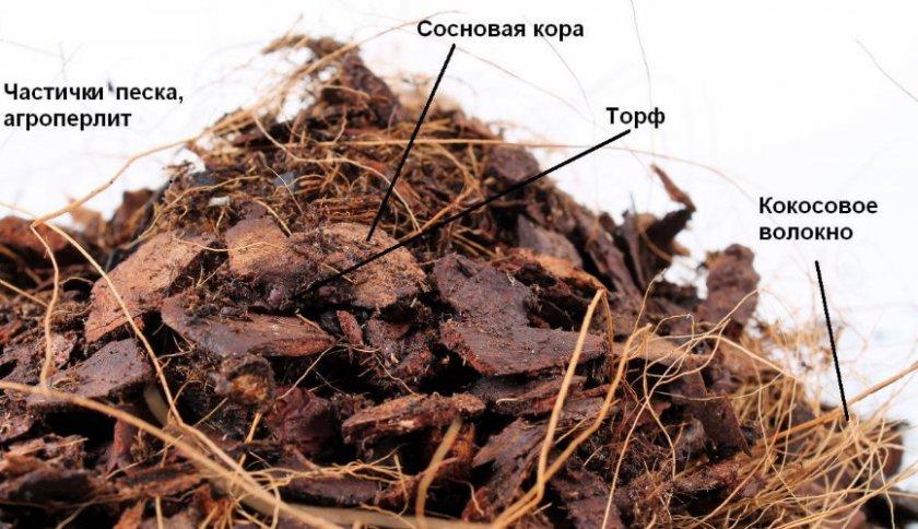 Структура субстрата для посадки орхидей