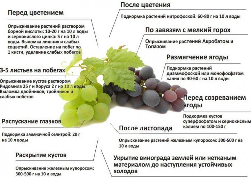 Схема подкормок винограда