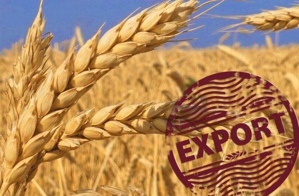 Египет может получить больше украинского зерна уже в следующем году