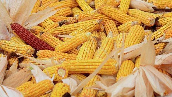 Китайцы увеличили импорт кукурузы из Украины в 4 раза