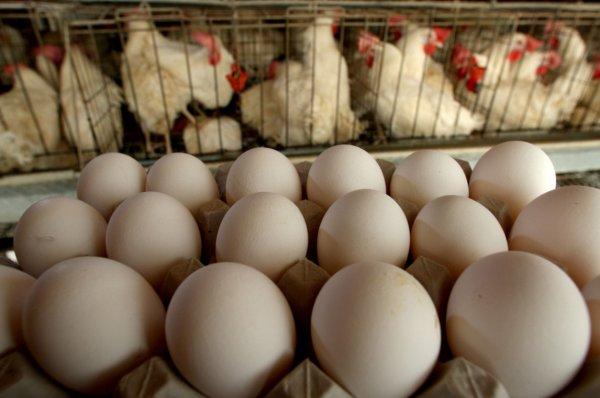 В Украине отмечается снижение производства яиц