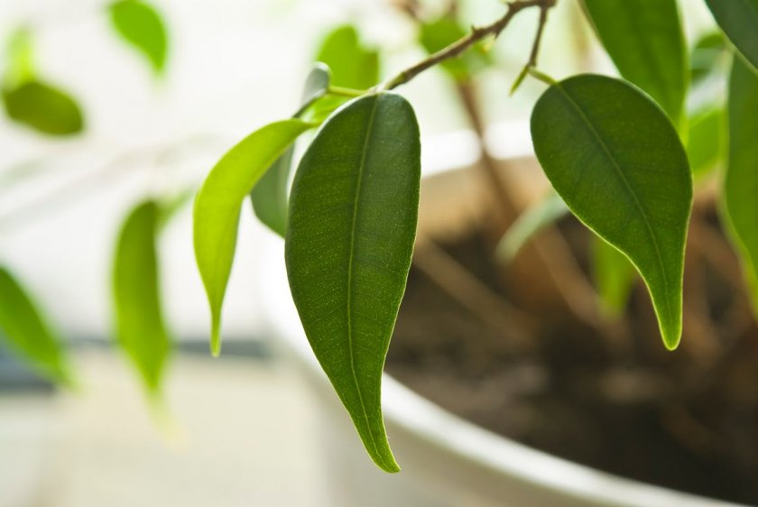 Естественный процесс сброса листьев