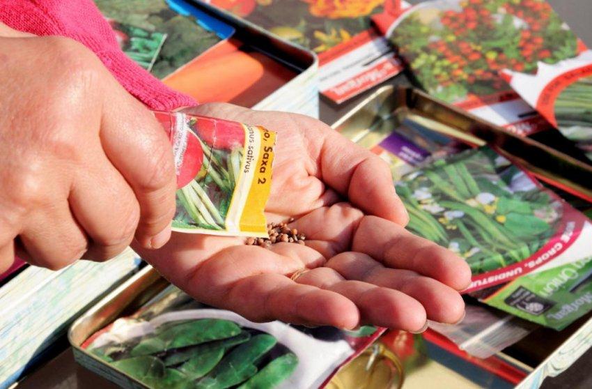 Выбор правильных семян