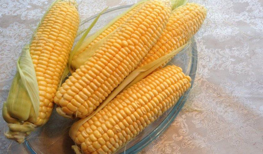 Кукуруза сорта Бондюэль