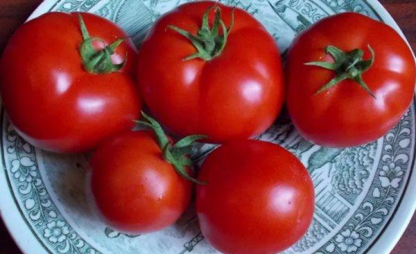 томаты крупноплодные низкорослые для теплиц