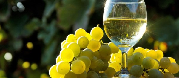 Белое вино изготовление