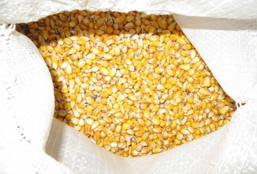Хранение семенного фонда кукурузы