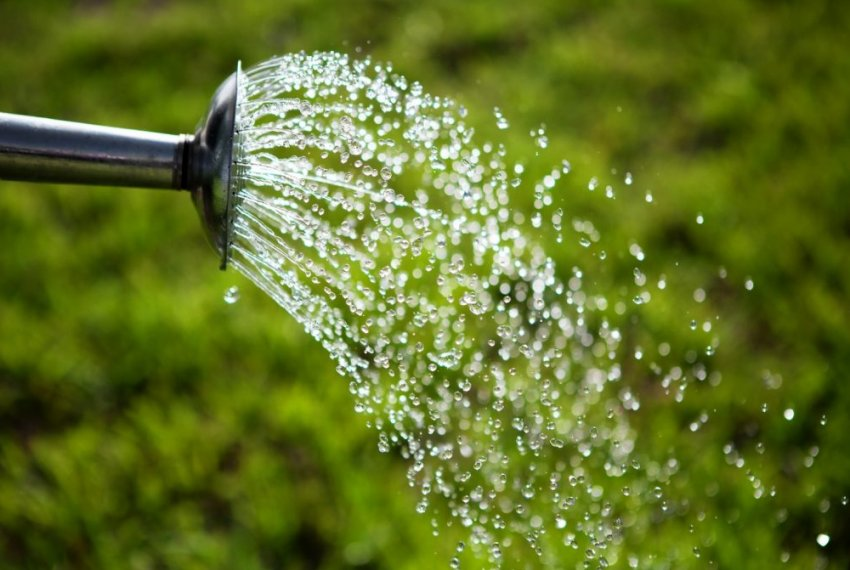 Вода для полива