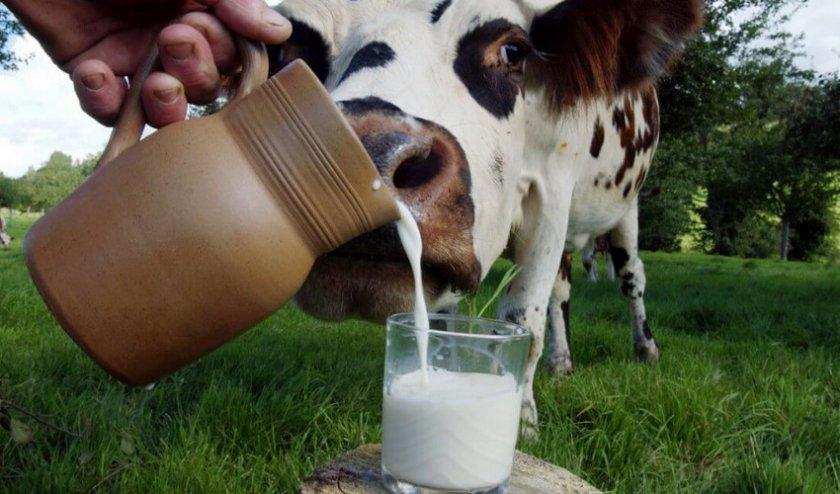 Молоко после отела