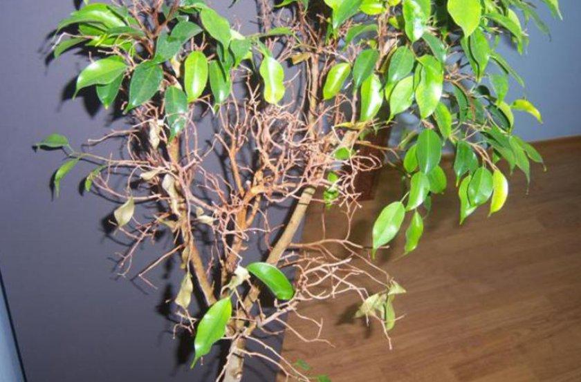 Опадание листьев