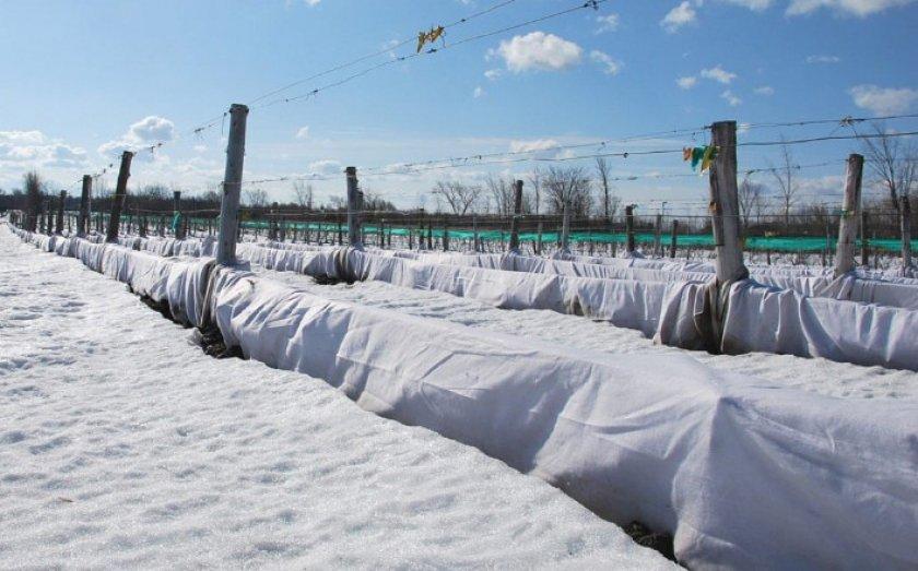 Зимнее укрытие виноград