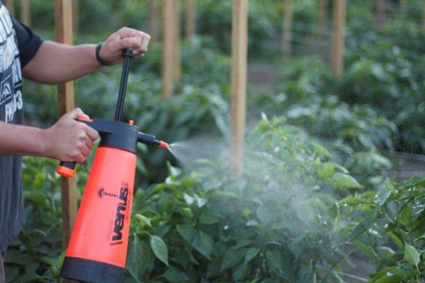 Опрыскивание томатов от фитофторы