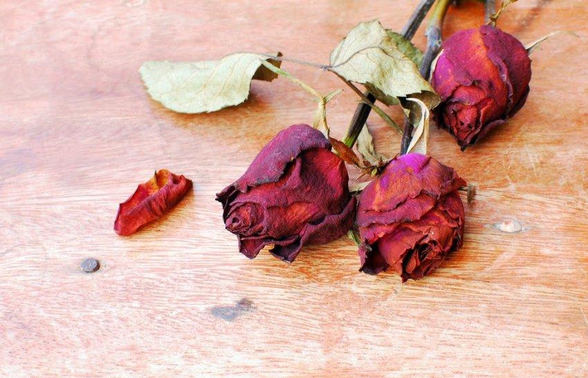 Увядшие розы