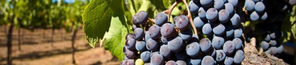 Как делают вино в молдавии