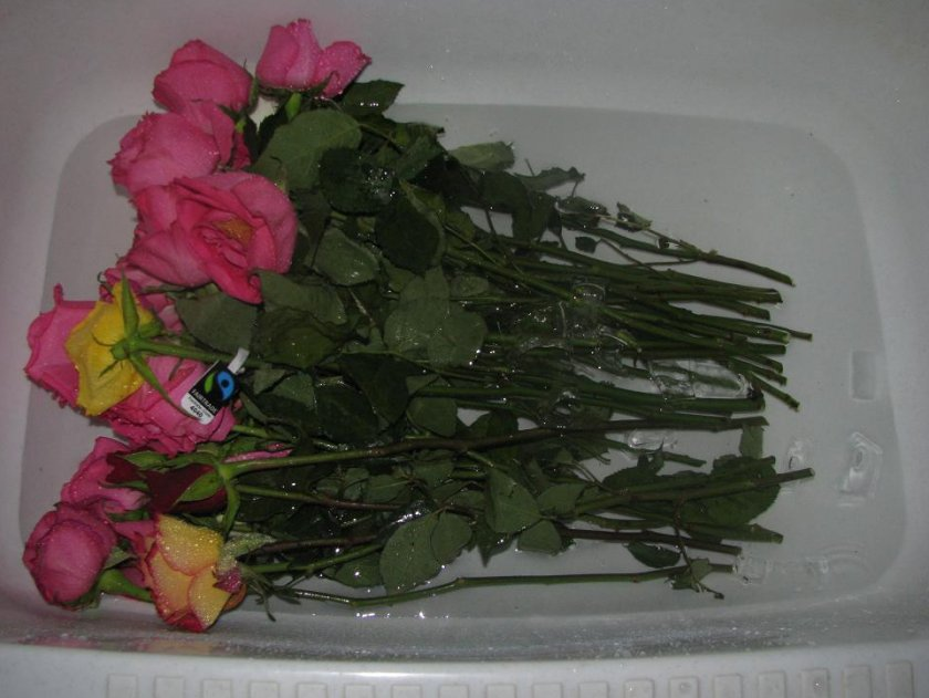 Букет роз в ванной, подсолнухи мурманск чабрец