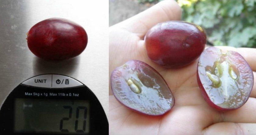 Ягоды винограда сорта эверест