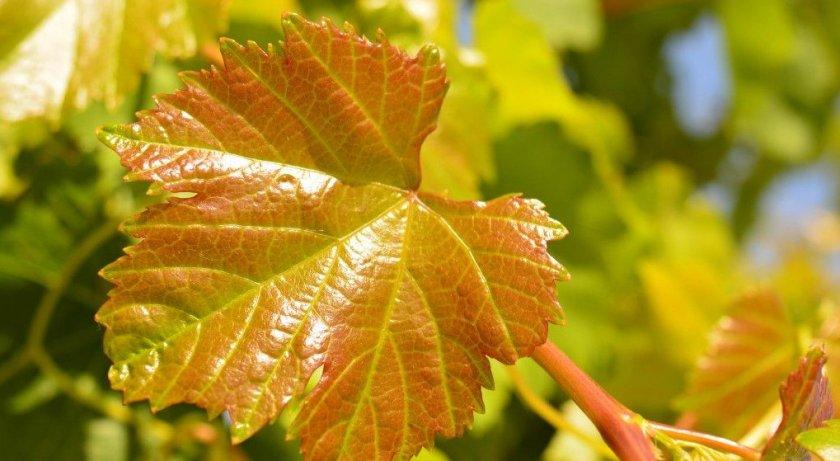 Изменение окраса листьев