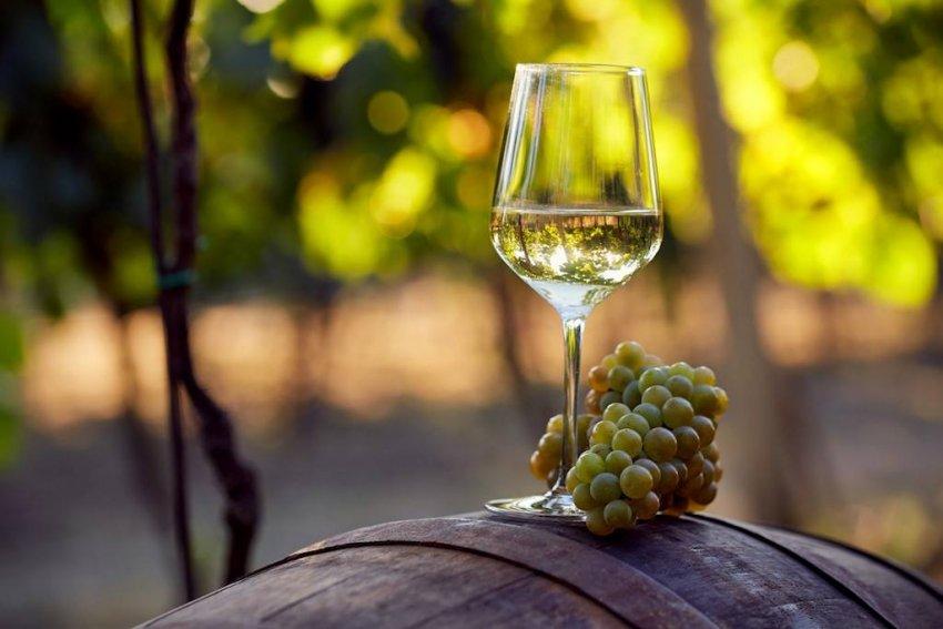 Виноград Шардоне в виноделии