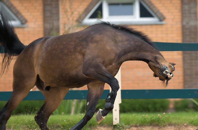 Бешенство у лошади