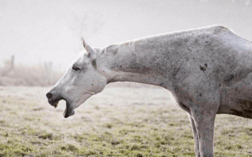 Кашель у лошади