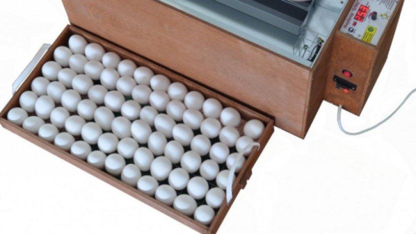 Закладка яиц