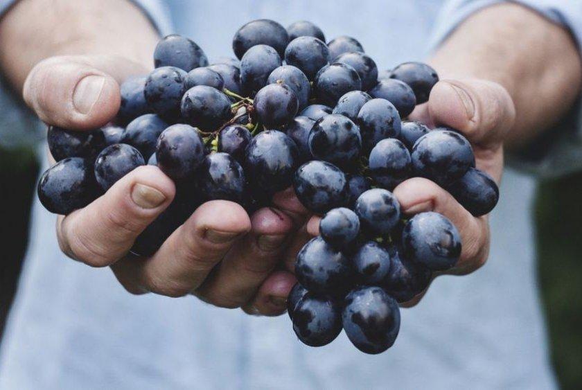 Эффективность лечения виноградом