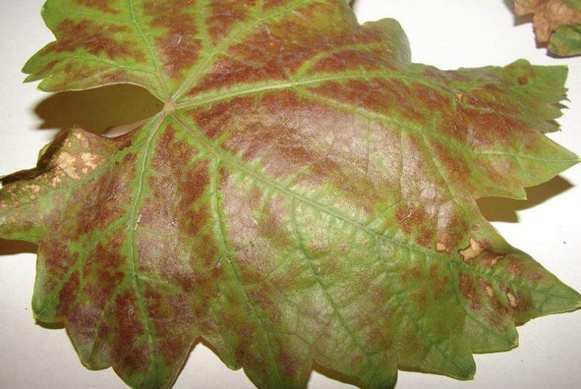 Листья покраснели