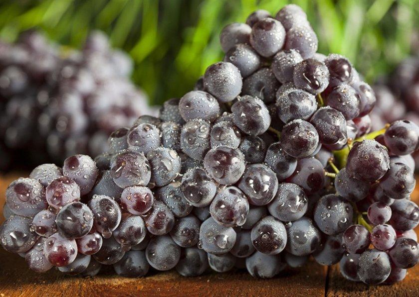 Как выбрать виноград для маринования