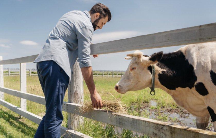 Питание коровы