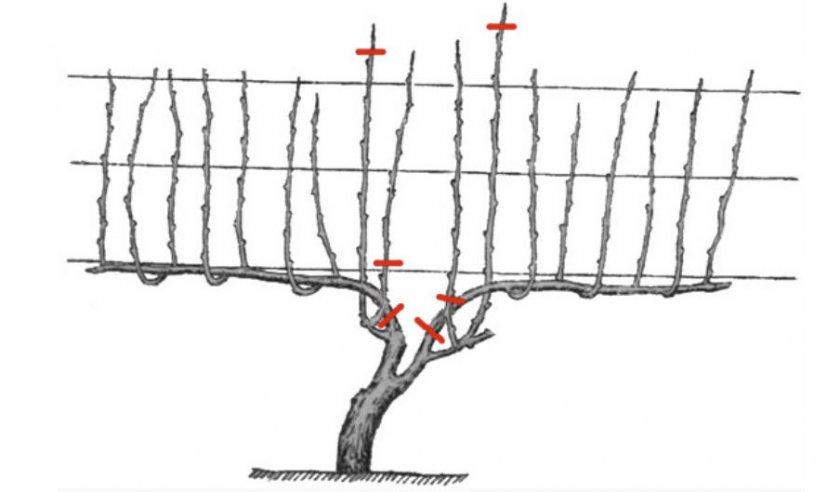 Обрезка ветвей