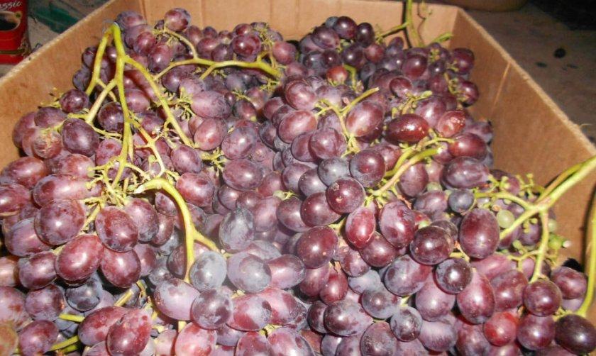 Урожай винограда марадона