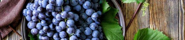 Посадка винограда в средней полосе для начинающих