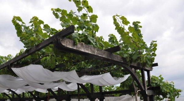 Беседка под виноград своими руками: как сделать ее грамотно